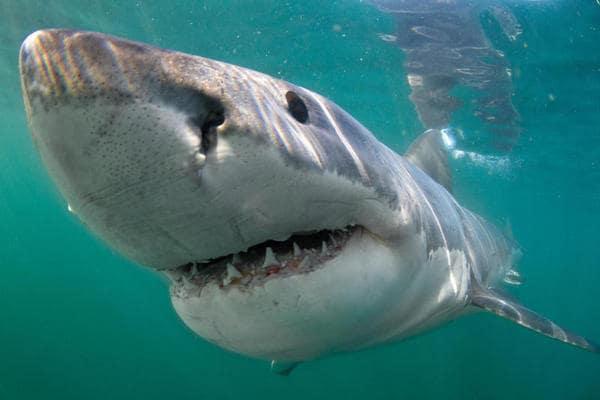 Lo squalo Mary Lee è diventata una star dei Social!