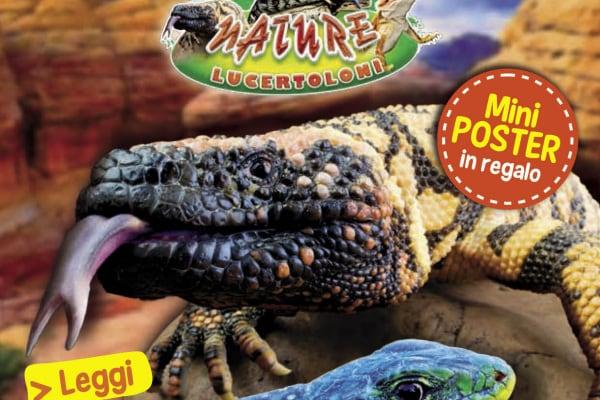 Play Magazine Nature Lucertoloni