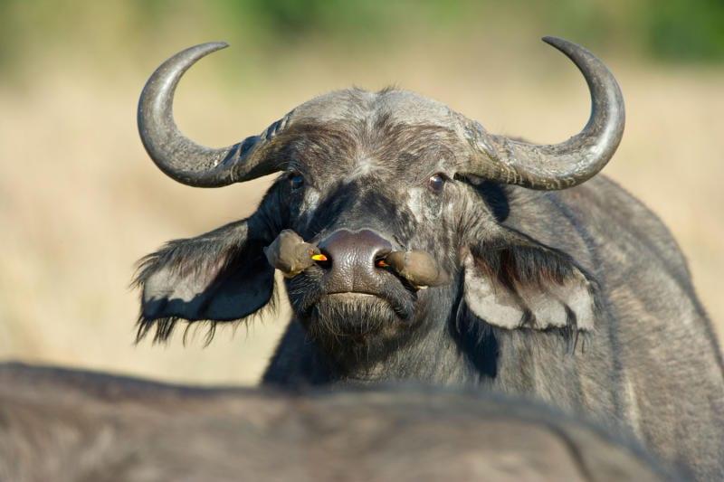 Come si fa a smascherare le bufale