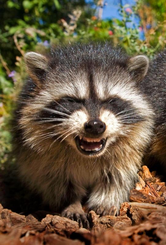 Animali che sorridono: i più simpatici dal regno animale / Image 3