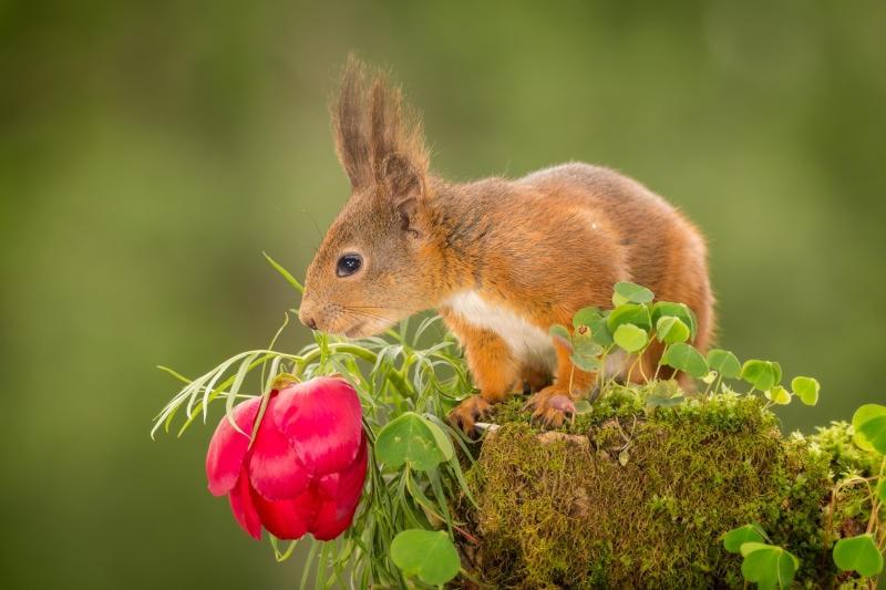 Animali che si svegliano in primavera |Gallery / Image 7