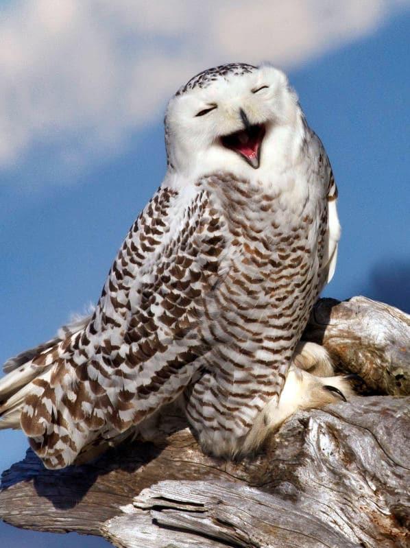 Animali che sorridono: i più simpatici dal regno animale / Image 4