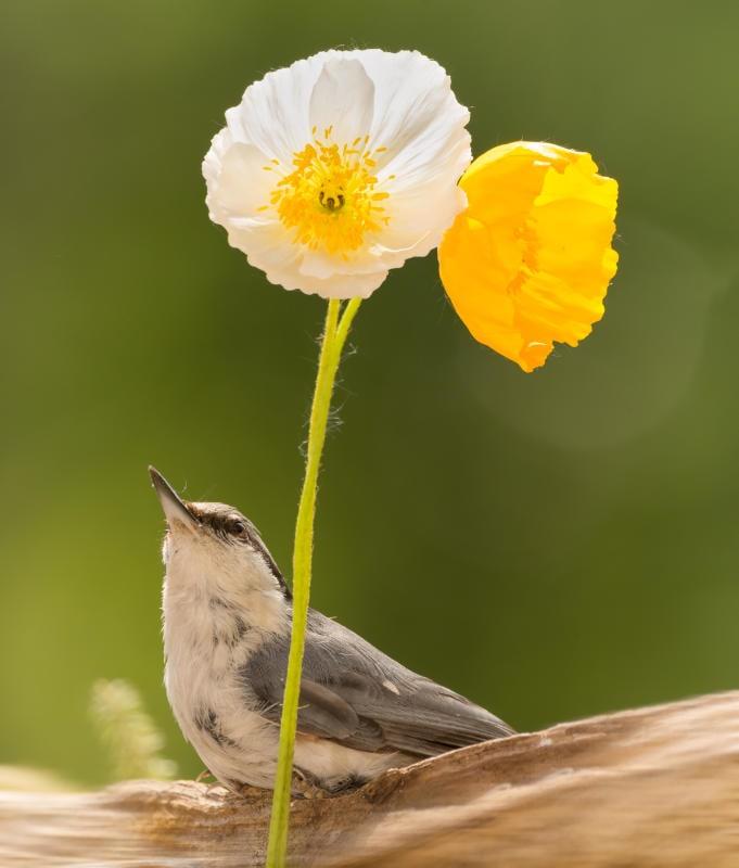 Animali che si svegliano in primavera |Gallery / Image 8