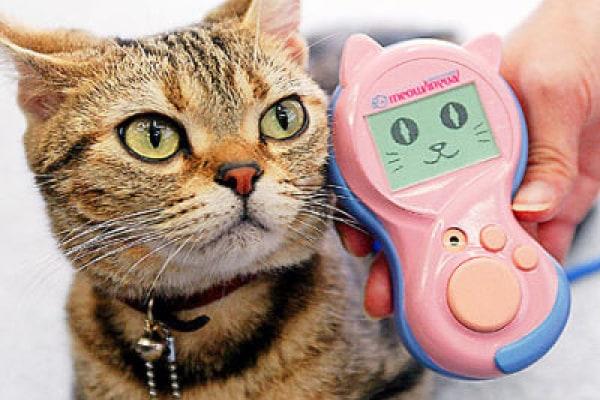 I gadget per cani e gatti più strani e divertenti